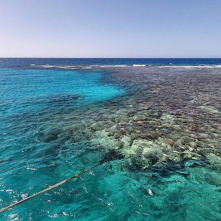 Marsa abu Galawa reef Hurghada Egypt