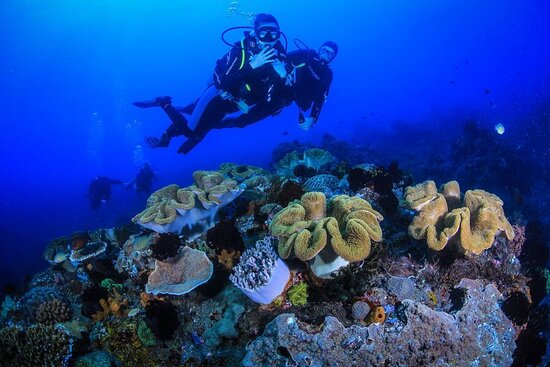 Rafakoralowa diving Hurghada: Intro diving Hurghada  Egypt