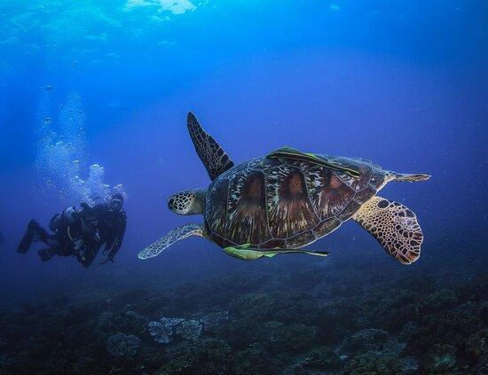 Rafakoralowa diving Hurghada