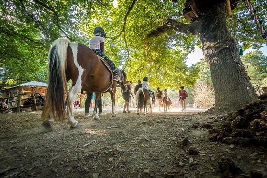 Vendee, Frankrig: Balade à poney