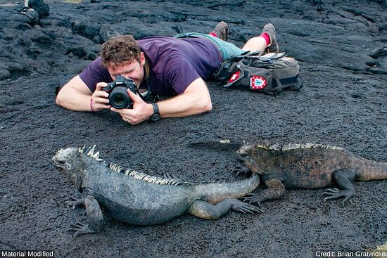 Galapagos & Mainland Ecuador: See Almost it ALL in 11 Days, 1st Class...