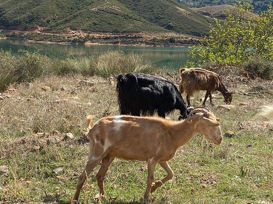 Voleones, Grécia: autour du barrage