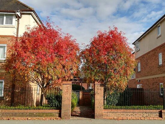อังกฤษ, UK:  October is my favourite autumn month. 😍