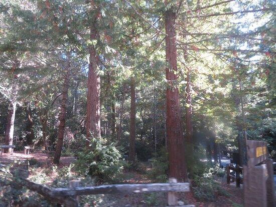 Sam McDonald Memorial Park
