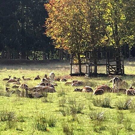 Uelzen, Alemanha: Wildgatter im Stadtwald