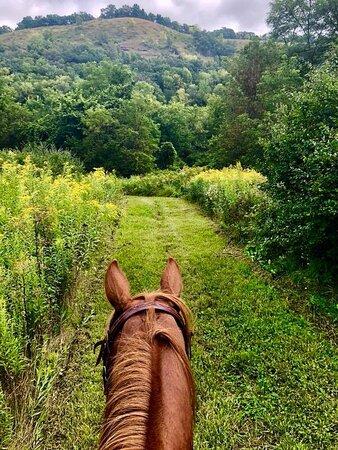 Houston, MN: Grass Trails