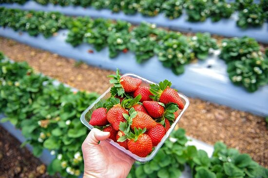 Mornington Peninsula Private Food Trail Tour with Pickup