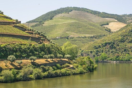 Full-Day Douro Valley Wine and Bike...