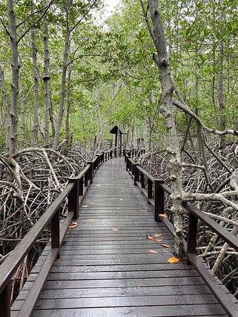 Beautiful walk full with nature