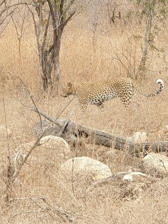 Fotografia de Ngala Private Game Reserve
