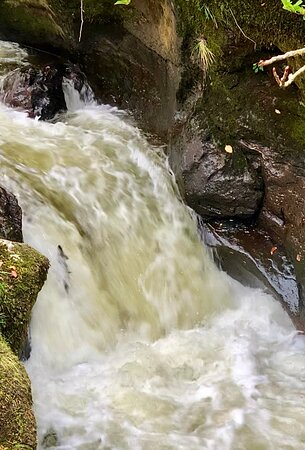 October is a great time to see the great Atlantic Salmon leaping. And this is a great spot to see them.