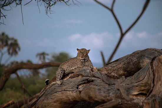 Shaba National Reserve, Kenia: Game drives at Sarova Shaba