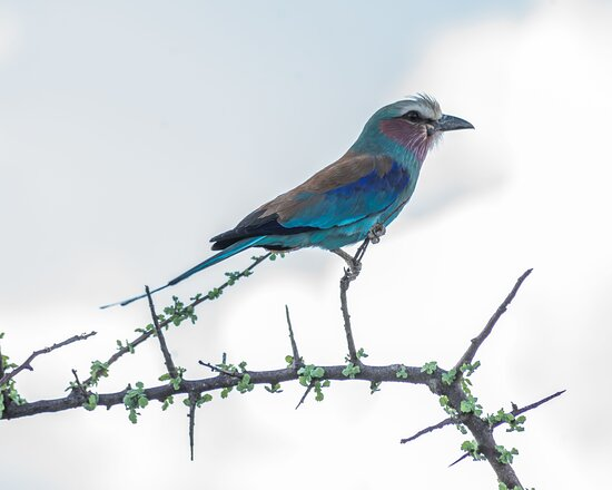 Shaba National Reserve, Kenia: Bird life at Sarova Shaba