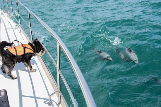 Akaroa Dolphins