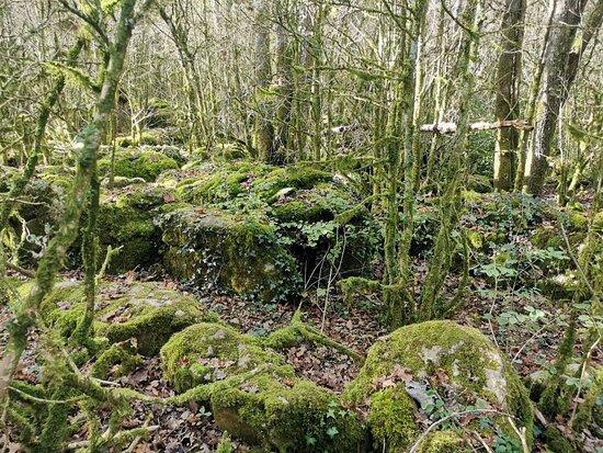 Le Labyrinthe Vert Nebias
