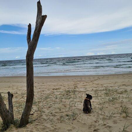 Holidaying with dog