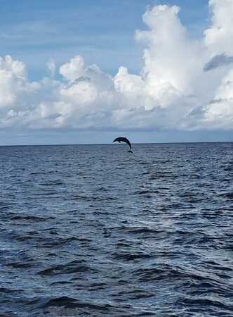 sortie découverte dauphins tortues chauves souris