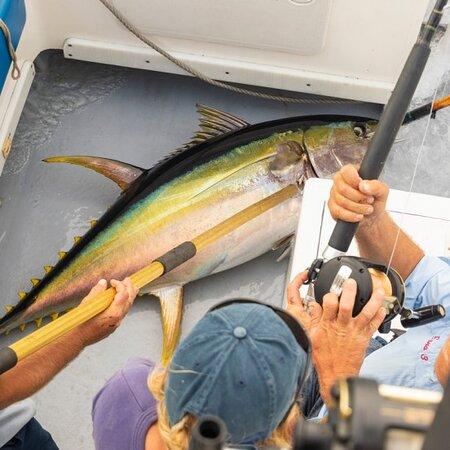 Hermanus, Sydafrika: Yellow fin tuna caught 25 miles off Cape Point.