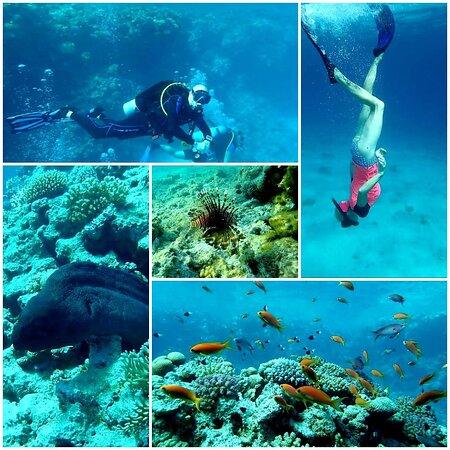 Rafakoralowa diving Hurghada Image