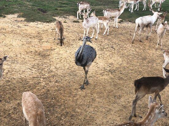 Folsom, LA: Global Wildlife Center Wagon Ride