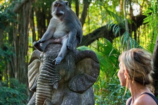 Full-Day : Monkey Forest - Rice Terrace...