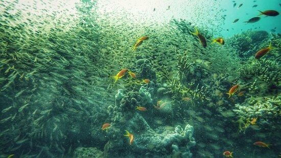 Rafakoralowa diving Hurghada: Jedno z nurkowań na rafie Shaab Sabina.