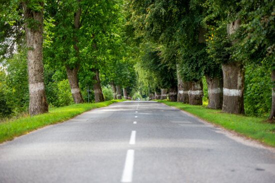 The pride of Lithuania Minor, the town with the longest oak alley - Smalininkai.