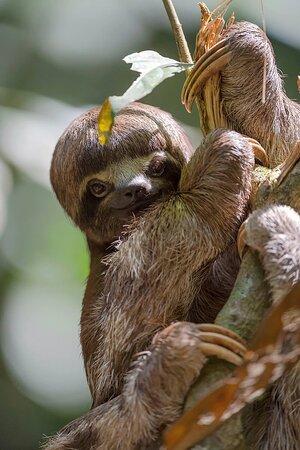 Região de Loreto, Peru: Pacaya Samiria National Reserve 4