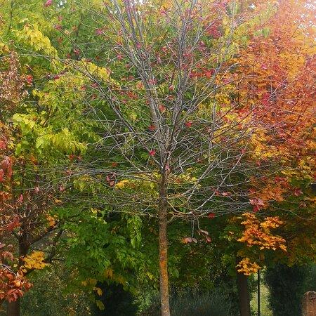 Petroio, إيطاليا: L'autunno a Casina Valloreci....cosi romantico!!! ❤ 