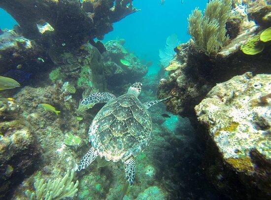 divePro Cancun Diving