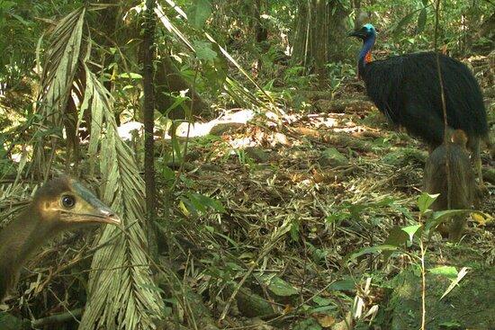 Jungle Escapes Adventures & Tours