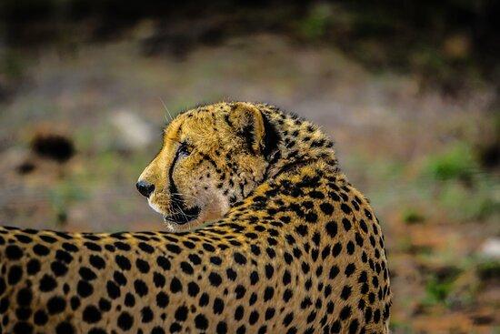 Afro-Vertex Tours & Safaris