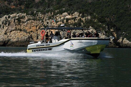 מחוז סטובאל, פורטוגל: Passeios pela Costa da Arrábida! Observação de golfinhos!  #rotasdosal  #setubalinmyheart