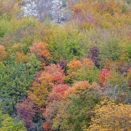 Veroli, Italy: Voglio un autunno rosso come l'amore, giallo come il sole ancora caldo nel cielo, arancione come i tramonti accesi al finire del giorno, porpora come i granelli d'uva da sgranocchiare. Voglio un autunno da scoprire, vivere, assaggiare. Stephen Littleword