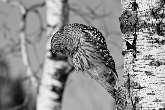 Next Bend Birding & Photography