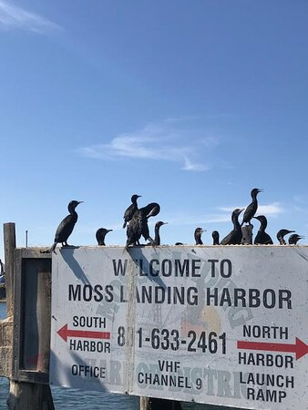 Welcome to Moss Landing
