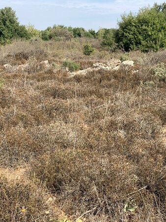 Jish, Israel: Someone from the other group claimed that this minor outcropping of rocks amongst the brush and bramble us the grave of Mordechai and Esther.... what a crock!!