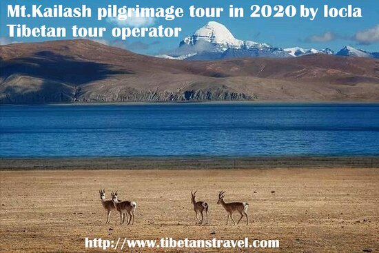 We are Tibet&China tour experts providing the largest range of all-inclusive tour packages and combinations which we can customise to meet your requirements. We utilise our experience, expertise and knowledge of Tibet combined with our passion and dedication to create and organise truly memorable China and Tibet tour experiences.  We offer the largest choice of tour routes and accommodation/car/activity combinations (Trekking, Camping, Horse Riding) We are China & Tibet Department of Tourism's
