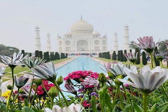 Car Rentals Agra- Raj Travel
