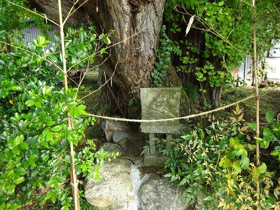 Chichibuhime no Maidenhair Tree
