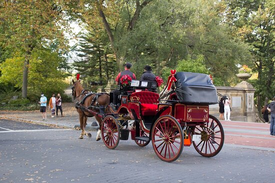 NYC Horse Carriage Rides - The Official Central Park Carriage Rides Website