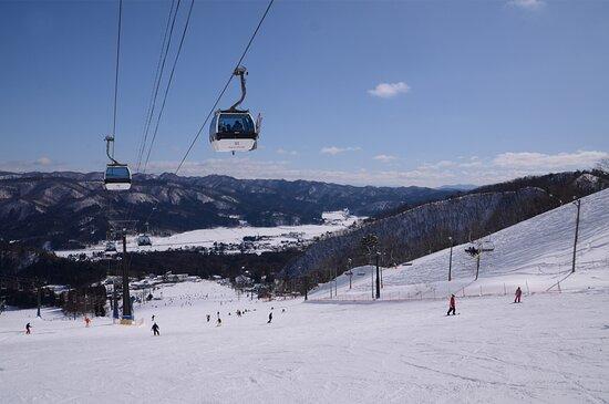 白马五龙滑雪场 / 高山植物园