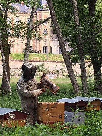 Nazelles-Negron, France: David, apiculteur, aux petits soins pour ses abeilles.