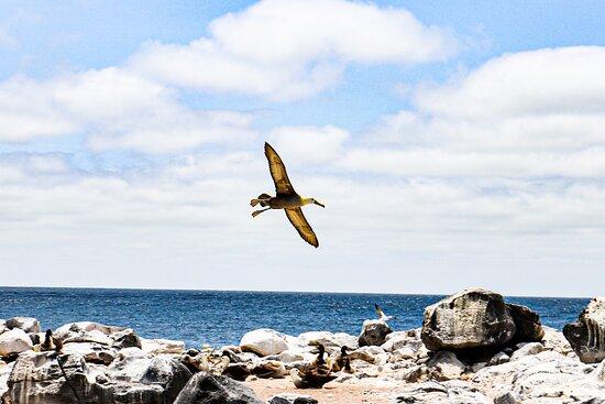San Cristobal, Ecuador: Tour Isla Española - Albatros