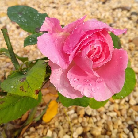Provincia de Valencia, España: After the rains ... life 🌹