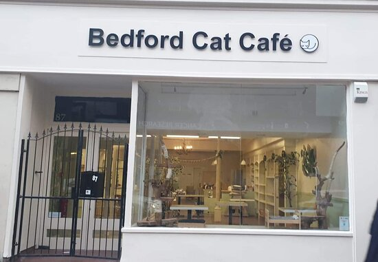 Bedford cat cafe