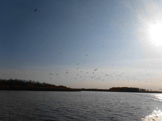 Khabarovsk Krai, Russia: Перелет птиц
