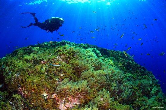 Centro de Buceo Extra Divers El Hierro