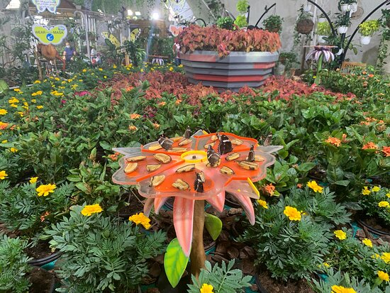 Dubai Butterfly Garden 2020 All You Need To Know Before You Go With Photos Tripadvisor