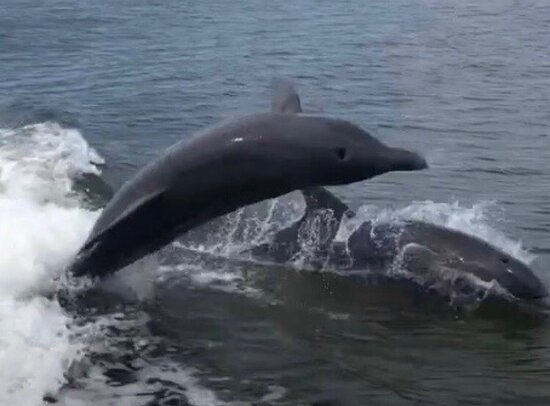 The Dolphins & Friends Experience